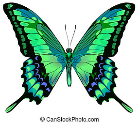 vecteur, fond, papillon, beau, isolé, blanc, vert bleu, illustration