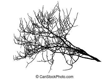 vecteur, illustration, branche, arbre, silhouette, grand, winter.