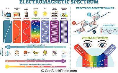vecteur, information, entiers, elements., temperature., électromagnétique, collection, spectre, illustration, vague, diagramme, infographic, fréquence, structure, lengths, physique, scheme.