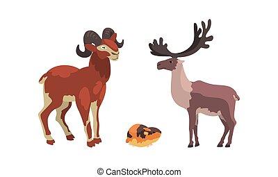 vecteur, lemming, animaux, arctique, ensemble, polaire, renne, illustration, dessin animé, chèvre montagne