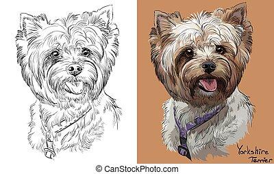 vecteur, monochrome, portrait, dessin, yorkshire, main, coloré, terrier