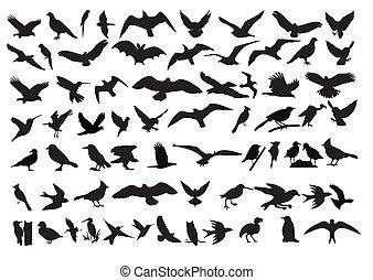 vecteur, oiseaux