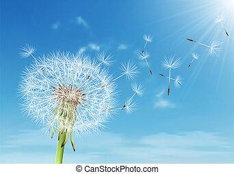 vecteur, pissenlit, voler, ciel, nuageux, graines