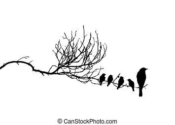 vecteur, silhouette, oiseaux, branche