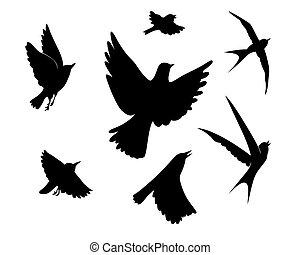 vecteur, silhouette, voler, illustration, fond, blanc, oiseaux