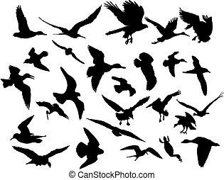 vecteur, voler, oiseaux