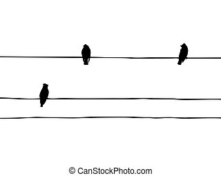 vecteur, waxwings, fil, silhouette, oiseaux