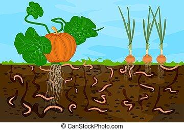 vegetable., terrestre, jaquette, terre