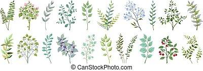 vendange, collection., feuilles, botanique, nature, branches, exotique, jardin, vecteur, bouquet, verdure, elements., feuillage, mariage, usines