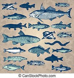 vendange, fish, ensemble, (vector)