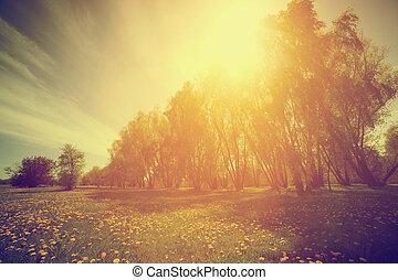 vendange, nature., ensoleillé, arbres, parc, pissenlits, printemps