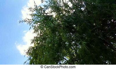vent, branches, sous, bleu, oscillation, sky., arbre, saule