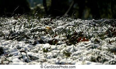 vent, couvert, mouvementde va-et-vient, herbe, neige