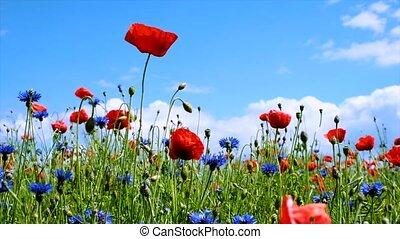 vent, ensoleillé, vaciller, fleurs, jour été