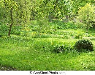 verdure, jardin