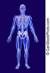 verre bleu, squelette, iridescent, homme