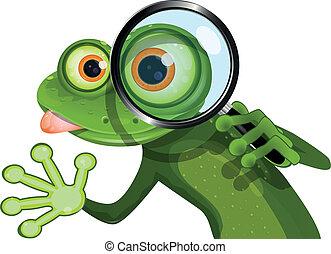 verre, magnifier, grenouille