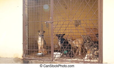 verrouillé, cage, chiens