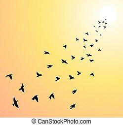 vers, soleil, voler, clair, vecteur, troupeau, oiseaux