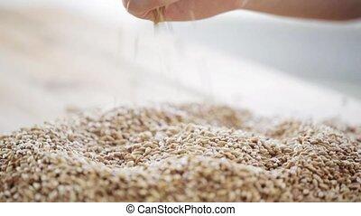 verser, grains, agriculteurs, malt, main, céréale, mâle, ou
