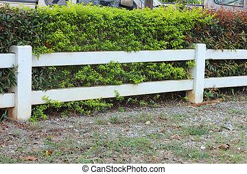 vert, barrière, arbre, blanc