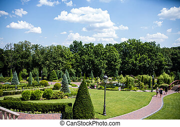 vert, beau, arbres bleus, parc, ciel