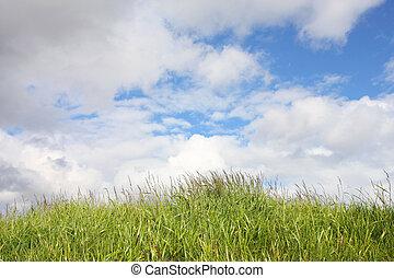 vert bleu, herbe, ciel