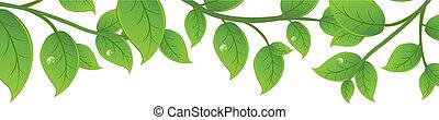 vert, branches