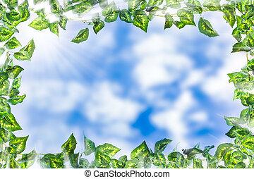 vert, frontière, lierre