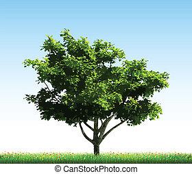 vert, grass., vecteur, arbre