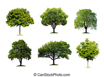 vert, isolé, arbres