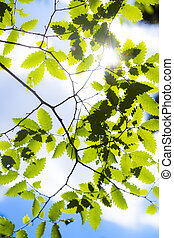 vert, leafes, jour ensoleillé, branche