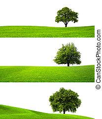 vert, nature
