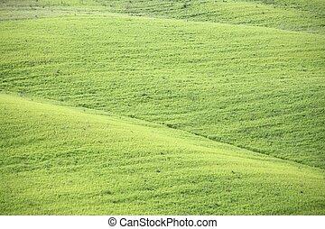 vert, pâturages, toscane