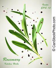 vert, romarin, vecteur, branche, illustration, épices
