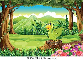 vert, souche, oiseau, au-dessus, forêt