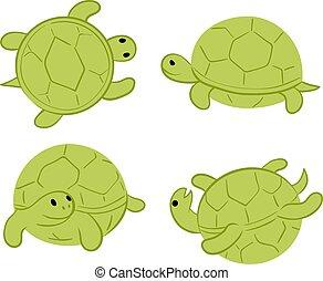 vert, tortues