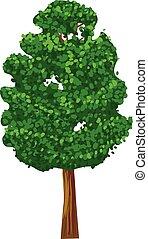 vert, vecteur, arbre, icône