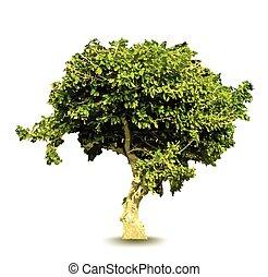 vert, vecteur, arbre