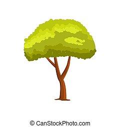 vert, vecteur, arbre, pin, icône