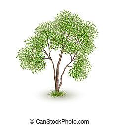 vert, vecteur, arbre, réaliste