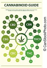 vertical, cannabinoid, guide, infographic