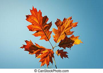 vibrant, feuilles, automne