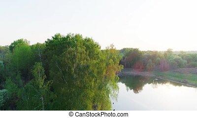 vidéo, aérien, forêt, étang, coucher soleil, lac, vert, ou, été