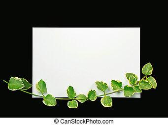 vide, lierre, notecard, blanc