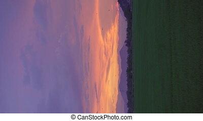 video., sur, beau, vertical, oiseaux volant, attraper, bogues, mouche, lot, champ, ricefield., coucher soleil