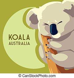 vie sauvage, animal, koala, australien, marsupial