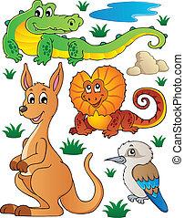 vie sauvage, australien, 2, ensemble, faune