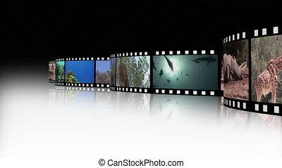vie sauvage, métrage, collage, 2