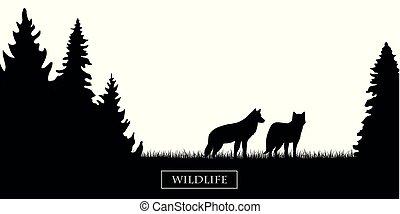 vie sauvage, silhouette, pré, deux, forêt noire, loups blancs